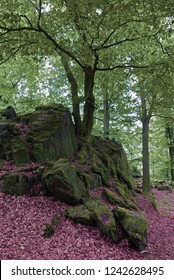 Wilhelmsteine: Rock outcroppings in a forest in Germany