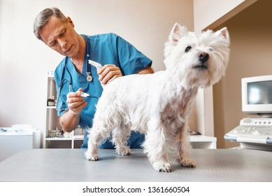 It will take a few minutes...Middle aged male vet in working wear is measuring body temperature of cute small dog at veterinary clinic