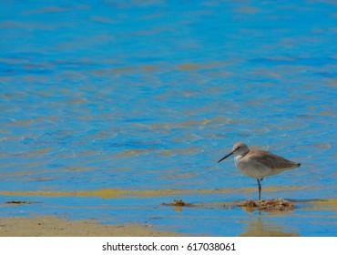Lemon Bay Florida Images, Stock Photos & Vectors | Shutterstock