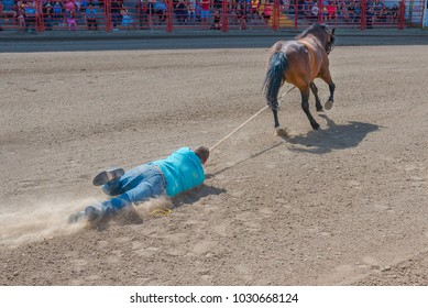 Williams Lake, British Columbia/Canada - July 2, 2016:  cowboy holding onto rope is dragged through dirt while trying to catch a horse during the Wild Horse Race at the 90th Williams Lake Stampede