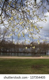 willow blossoms on a background of the river and the city