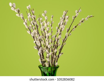 Willow bouquet with pussy willows, in glass vase, on green background.  Bunch of branches with furry catkins. Salix. Front view. Photo.