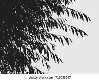 Willow branches with foliage against the sky. Black and white photo.