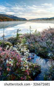Willow bushes and short spruce trees in colorful autumn tundra on the side of foggy Polygonal lake in Kunijok valley, Hibiny mountains above the Arctic circle, Russia