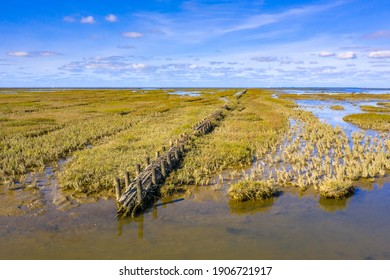 Willow campshedding in Tidal Marshland national park and Unesco World heritage area Waddensea in Province of Groningen. Netherlands