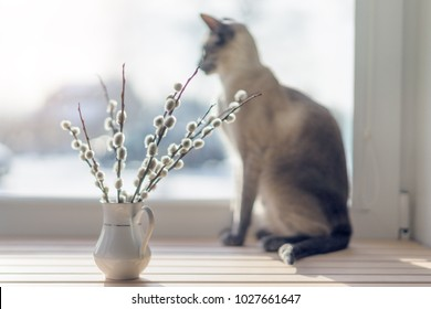 Willow catkins in vase, wood sill, on background Cat Looking Out The Window