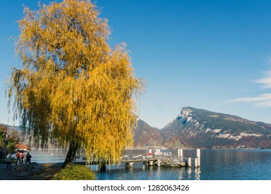 Willow at a jetty on Lake Thun with the Niederhorn mountain in the background.