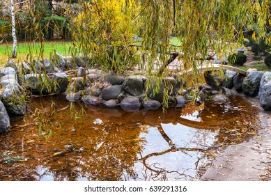 Willow reflected in a mini pond in autumn.
