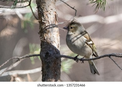 Willow tit sitting on a branch in a forest looking to north in Karlstad, Sweden Photo taken: 2019-03-29
