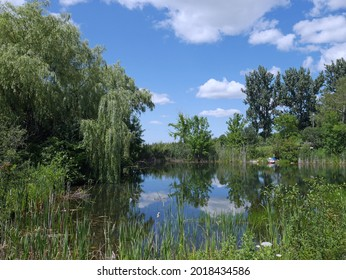 willow tree and bullrushes surrounding a placid pond reflecting the sky