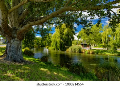 Willow trees by Avon River in Christchurch, New Zealand