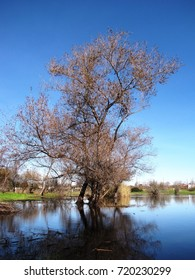 Willow trees reflected in a marsh, California