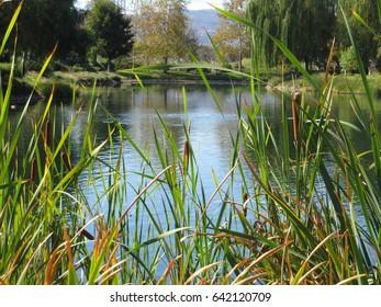 Willow View Lake