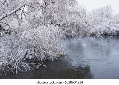 Willow in water covered with snow