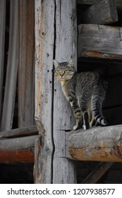 Willy the barn cat