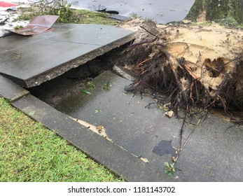 Wilmington North Carolina - USA / September 16, 2018. The continued aftermath of Hurricane Florence on downtown. Downed tree destroys sidewalk