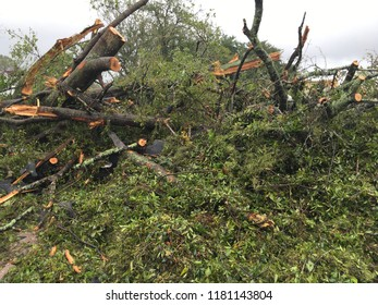 Wilmington North Carolina - USA / September 16, 2018. The continued aftermath of Hurricane Florence on downtown. Clean up begins before storm is over. Large pile of debris and cut limbs