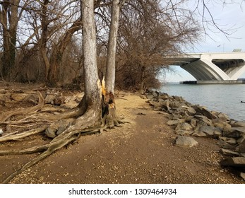 Wilson bridge and Potomac river with rocks and shore and tree that was struck by lightning