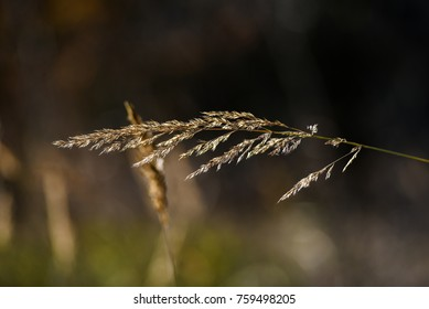 Wilted grass shines in the sun in the autumn season.