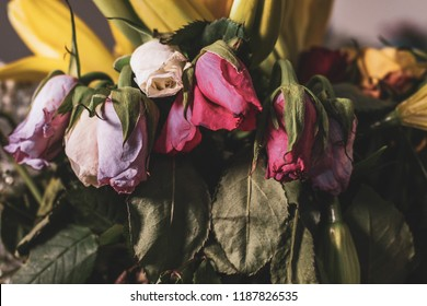 Wilted pink and white roses with a faded nostalgic tone