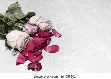 Wilting bouquet of roses on a gray background. Broken heart concept. With place for text.
