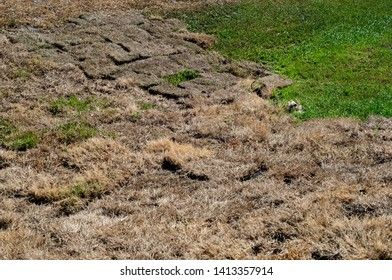 Wilting Dead Dry Sod Grass Squares Baking In the Summer Heat During a Drought