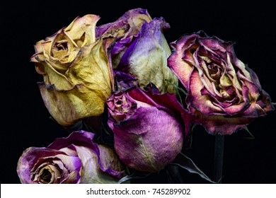 Wilting Flowers, drying roses