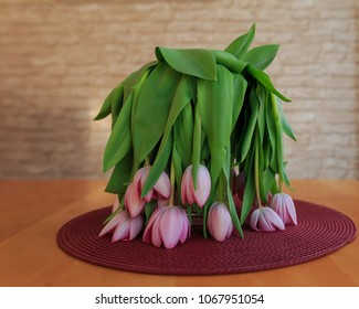 Wilting pink tulips in a vase
