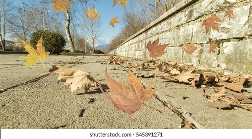 wind air leaves winter autumn background