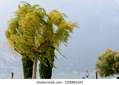 wind bends trees at touristic village on Garda lake where windsurfers rally, shot in bright fall light at Torbole, Italy