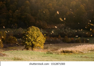 wind blowing autumn leaves io natural landscape with tree on meadow