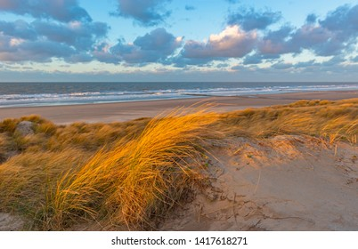 The wind blowing through the dune grasses with blur motion in the sand dunes along Ostend city beach at sunset, North Sea, West Flanders, Belgium.