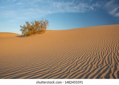 Wind Blown Sand Texture In Dunes