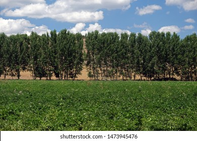 wind curtains for planting trees for protection from wind erosion