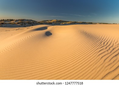 Wind dunes in national park in Poland