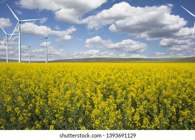 Wind energy park on rapeseed field, under the and blue sky