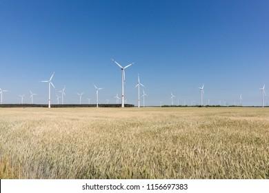 Wind energy turbines behind a cornfield under blue sky