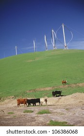 Wind farm with cattle in foreground
