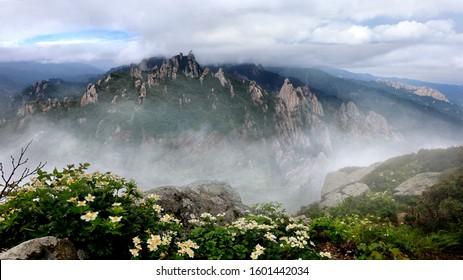 Wind flowers at Mt Seoraksan with the Dinosaur Ridge in the background , Korea