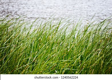 Wind Grass Water