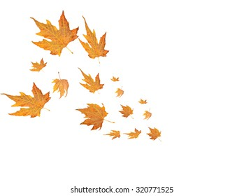 wind leaves, dry isolated, autumn background