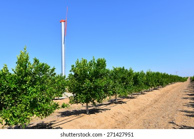 A wind machine stands guard against killing frosts in this Central California orange grove.
