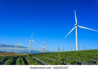 Wind machine,Strawberry farm, wind turbine