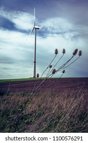 Wind mill on a field in the background and a dried out dipsacus