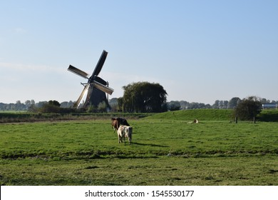 Wind mill painted by Piet Mondriaan with dutch cows in background
