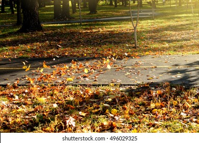 the wind picks up fallen leaves in the air