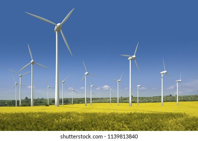 wind power plant and the field of yellow rape  (Brassica napus)