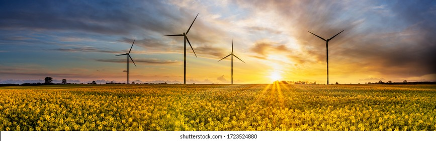 Wind power plants on yellow rape field at sunset