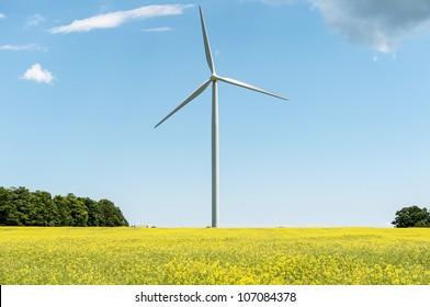 Wind propelled turbine generating electricity