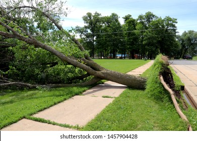Wind storm uprooted a tree and laid it over a sidewalk